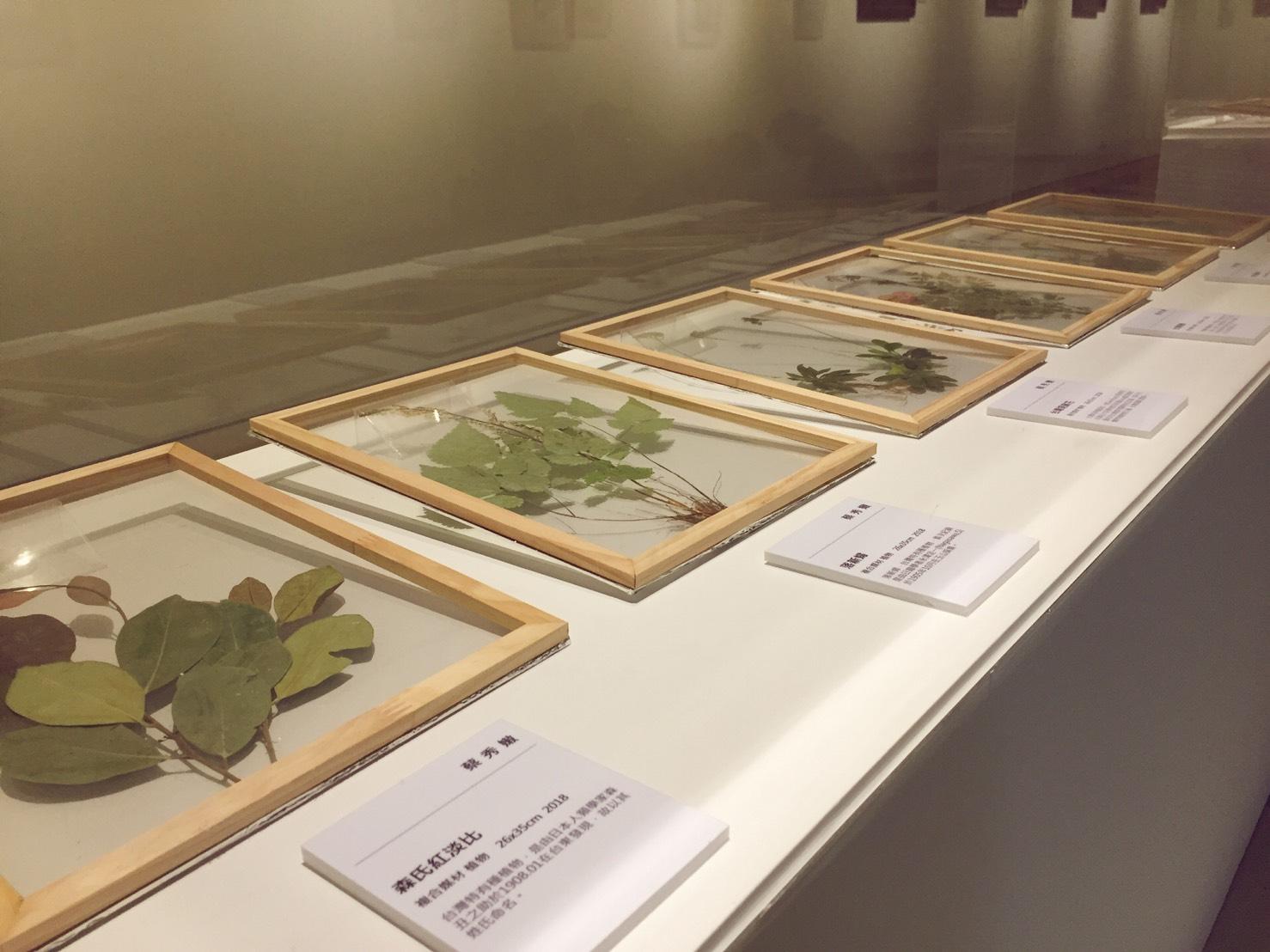 植物變畫作 臺藝大畢業生用異材質揮灑創意
